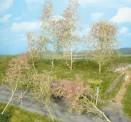 Heki 1638 Bäume Seemoos natur, 20 St.