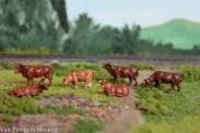 Van Petegem Scenery 0003 Kühe Gelbvieh 6 Stück