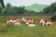 Van Petegem Scenery 0004 Kühe Fleckvieh Simmental 6 Stück