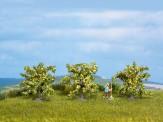 Noch 25115 Zitronenbäume 3 St.