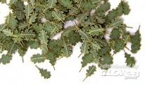 plusmodel 252 Grüne Eichenblätter
