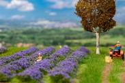 Faller 181279 Lavendelfeld