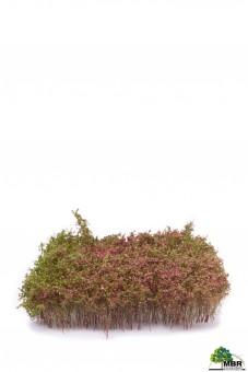 MBR model 50-5007 Sträucher, violett blühenden
